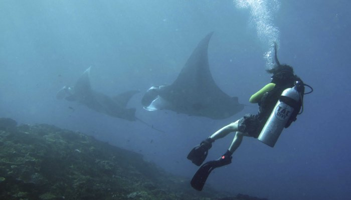 Mantas coming in for cleaning